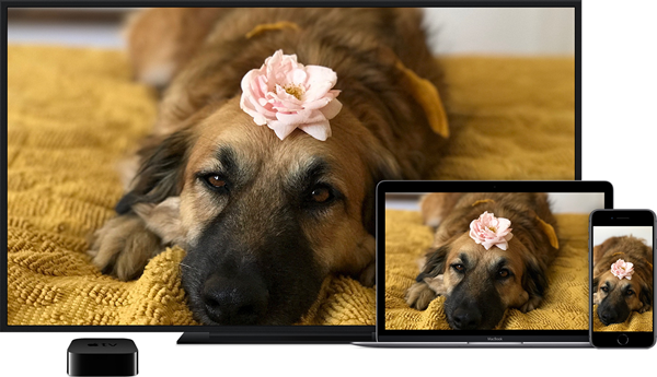 iOS devices with a doggy