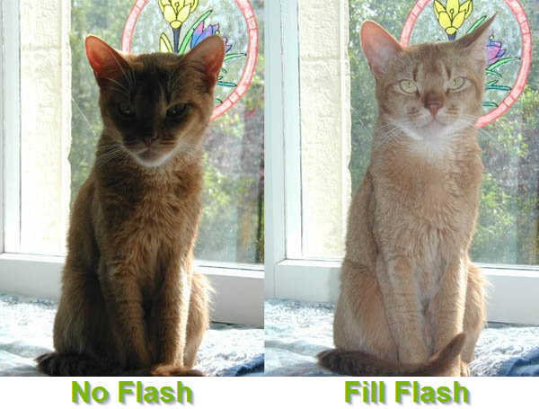 Photos with no flash and fill flash side by side.